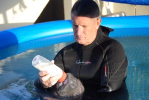 Instructor in wet suit bottle feeding manatee
