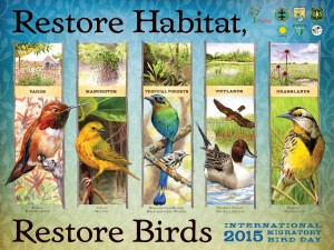 International Migratory Bird Day Poster featuring vertical drawings of birds in grassland, mashland, backyards, and mangroves. Restore Habitat, Restore Birds
