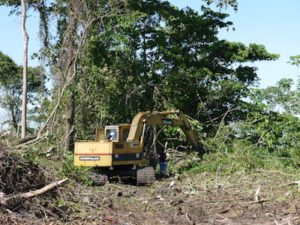 Heavy equipment removing trees