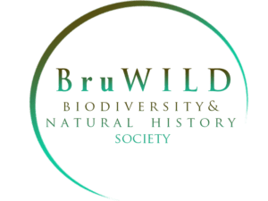BruWILD logo