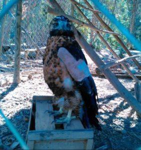 Wildlife Rehabilitation Around the World Archives - IWRC