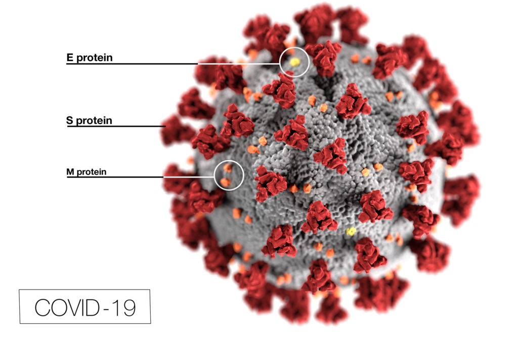 COVID-19 envelope virus