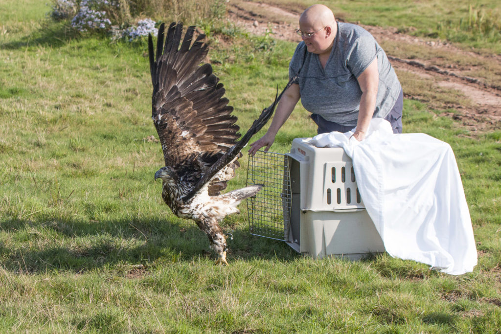 Helene Van Doninck opens the door of a large crate as an eagle flies out over a grassy field.