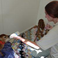 Wildlife Rehabilitation Intern