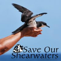 Save Our Shearwaters Coordinator Position